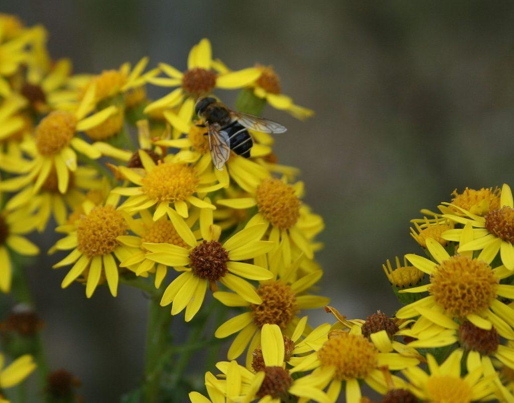 polen y alergias